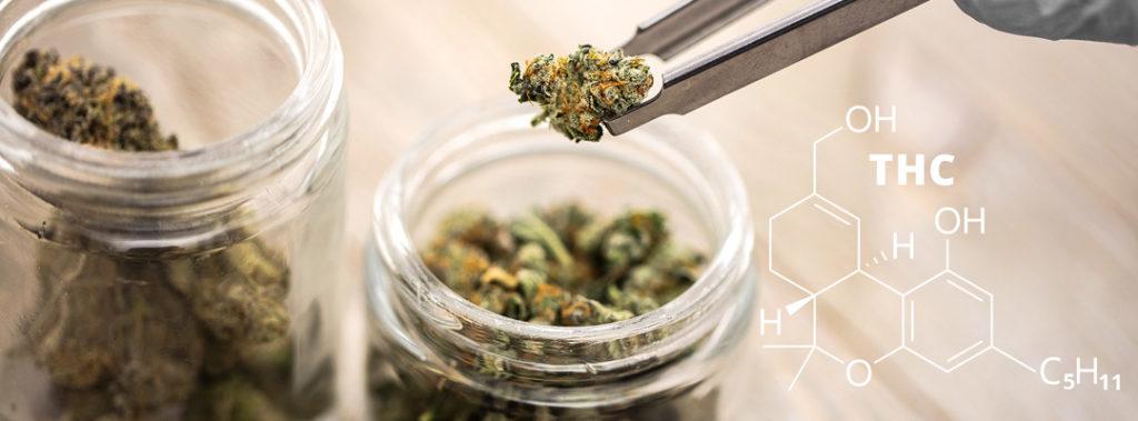 Symbolbild Studie medizinisches Cannabis