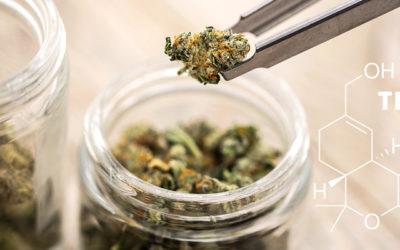 Zukunftsmarkt Medizinisches Cannabis